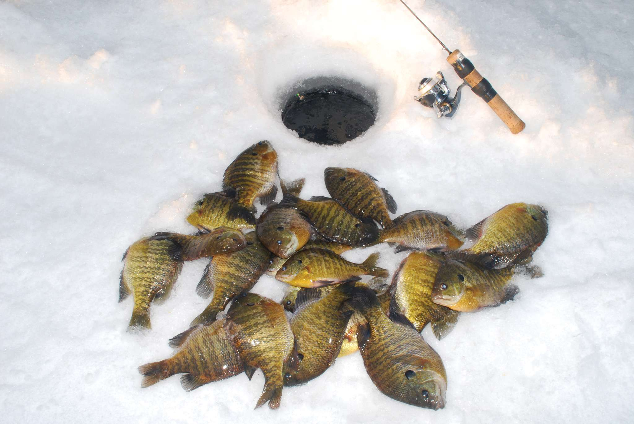 Winter fish