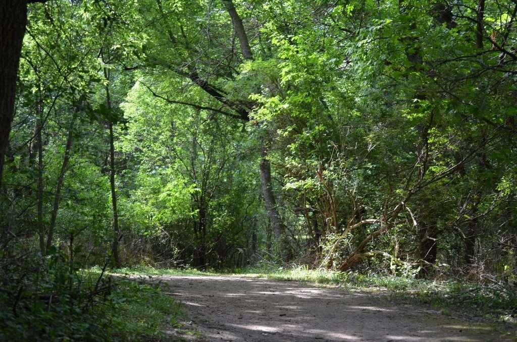 Gull Point Trail