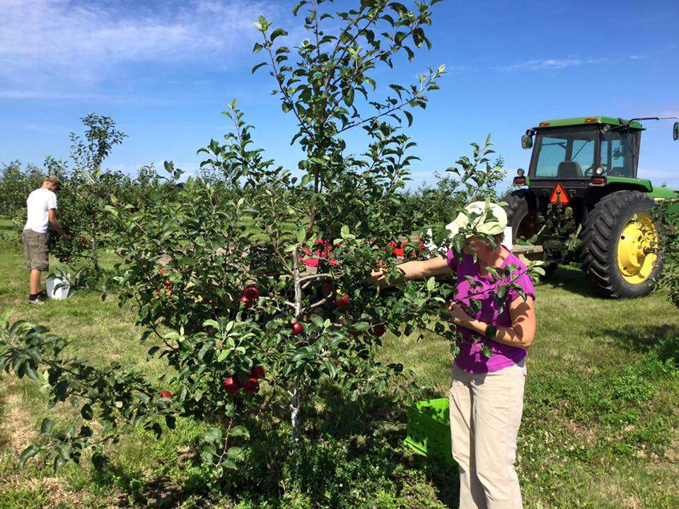 Little Sioux Orchard