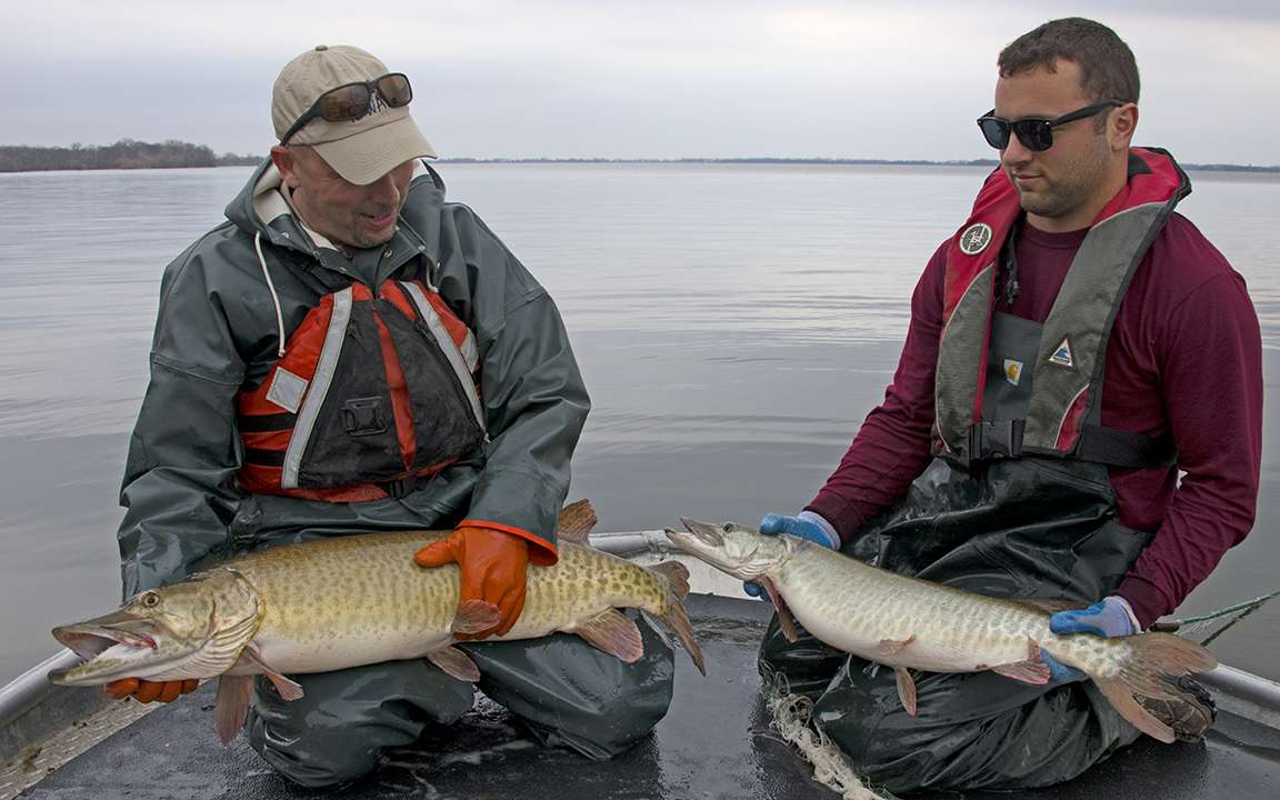 mike & jed holding walleye